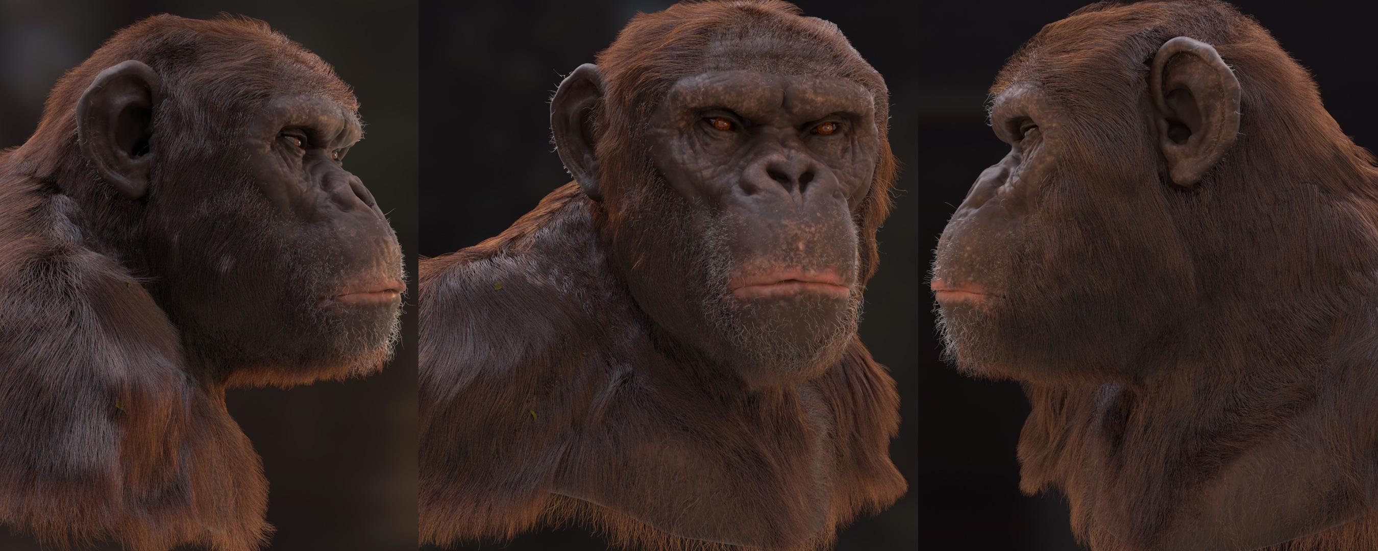 chimp_banner